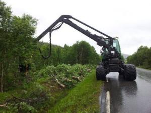skogryddinglangsvegsørli